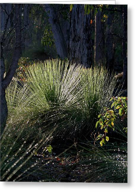 Dew On A Grass Tree Greeting Card