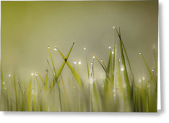 Dew On Grass Greeting Card