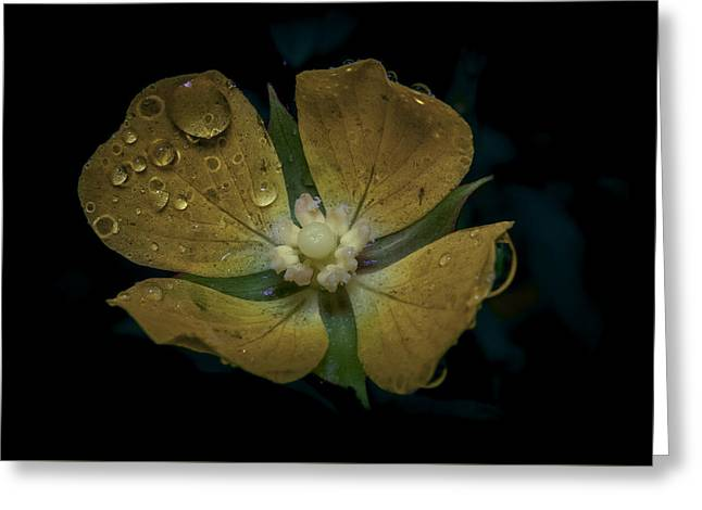 Dew To Drought 546 Greeting Card by Karen Musick