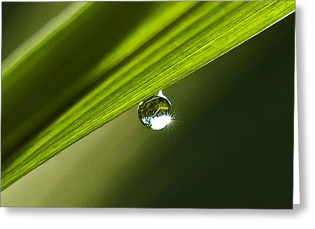 Dewdrop On A Blade Of Grass Greeting Card by Michael Whitaker