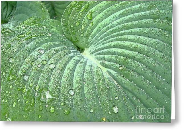 Dewdrops On A Hosta Greeting Card by Addie Hocynec
