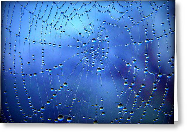 Dewed Web II Greeting Card