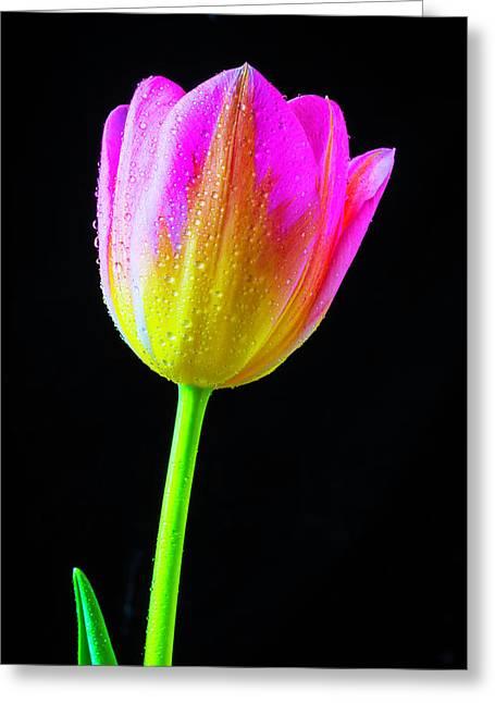 Dewy Pink Yellow Tulip Greeting Card