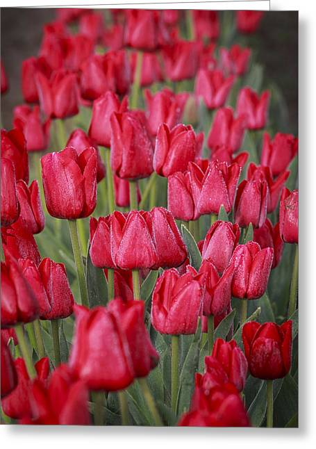 Dewy Red Greeting Card