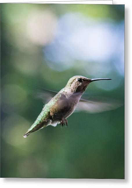 Hummingbird In Flight 3 Greeting Card