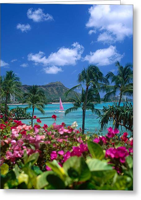 Diamond Head Paradise Greeting Card by Tomas del Amo - Printscapes