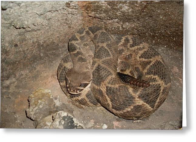 Diamondback Rattlesnake Greeting Card by Warren Thompson