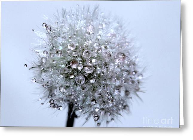 Diamonds Of Nature Greeting Card by Krissy Katsimbras