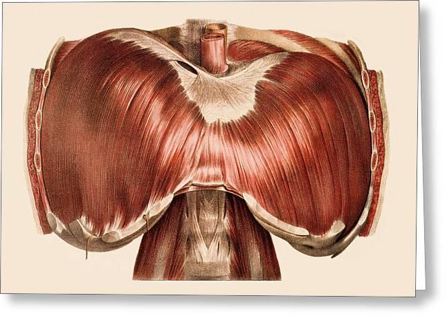 Diaphragm Greeting Card by Mehau Kulyk