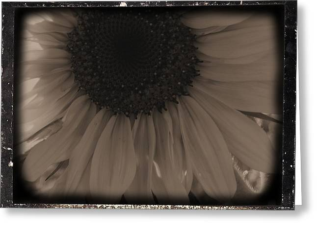 Diatrop Three Quarter Sunflower Greeting Card