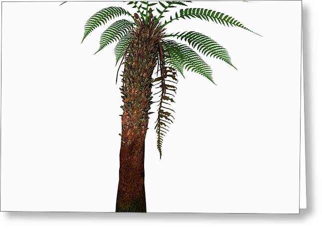 Dicksonia Antarctica Tree Greeting Card