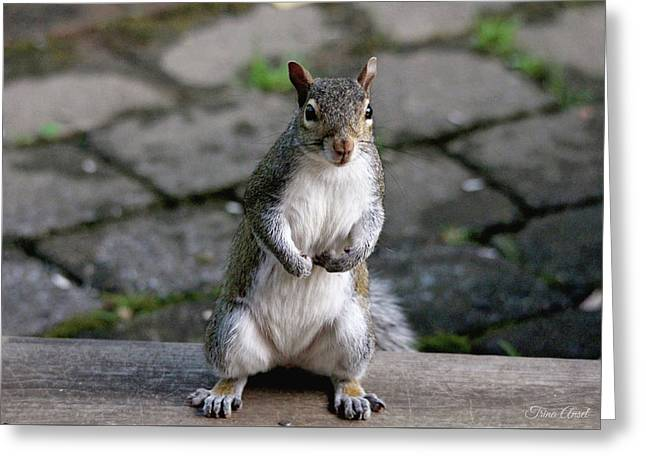 Greeting Card featuring the photograph Did You Say Peanuts? by Trina Ansel