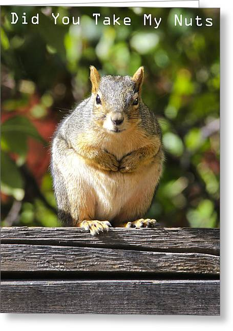 Greeting Card featuring the photograph Did You Take My Nuts by James Steele