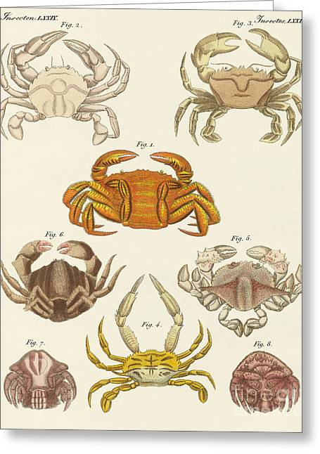 Different Kinds Of Crabs Greeting Card