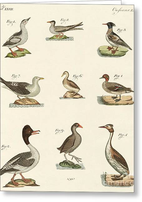 Different Kinds Of Waterbirds Greeting Card by German School