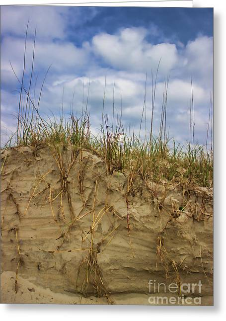 Digging In Deep In Sand Dunes Greeting Card