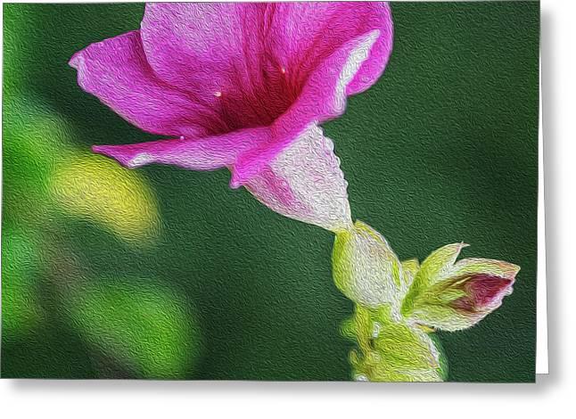Digital Painting Of Pink Allamanda Blanchetii Flower Greeting Card