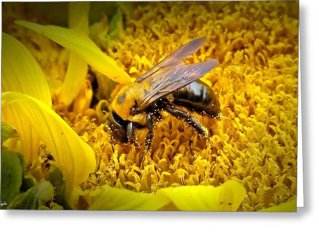 Diligent Pollinating Work Greeting Card