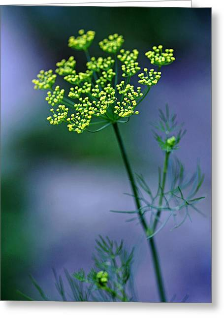 Dill Sprig Greeting Card by Debbie Oppermann