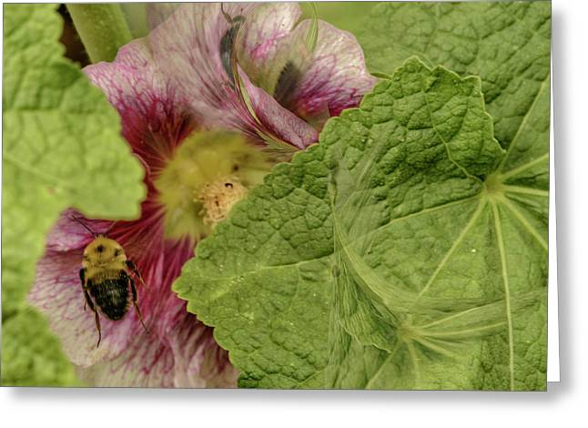 Dimensions Of Bees_flowers Greeting Card