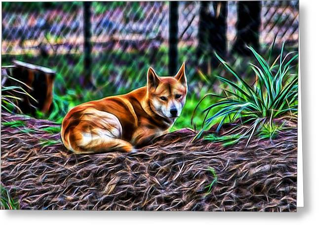 Dingo From Ozz Greeting Card