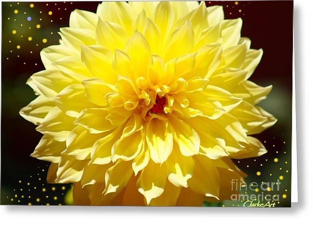Dinner Plate Dahlia In Starry Sky Greeting Card