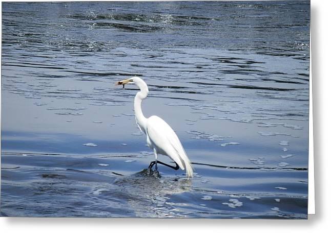 Dinnertime Pelican Greeting Card