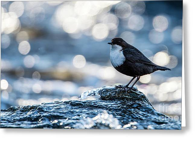 Greeting Card featuring the photograph Dipper On Ice by Torbjorn Swenelius