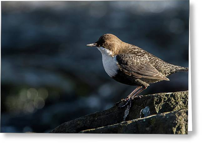 Greeting Card featuring the photograph Dipper by Torbjorn Swenelius