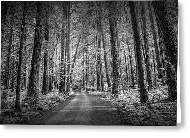 Dirt Road Through A Rain Forest In Black And White Greeting Card by Randall Nyhof