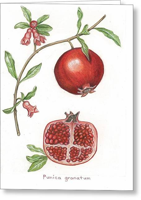 Dissection Of A Pomegranate Greeting Card