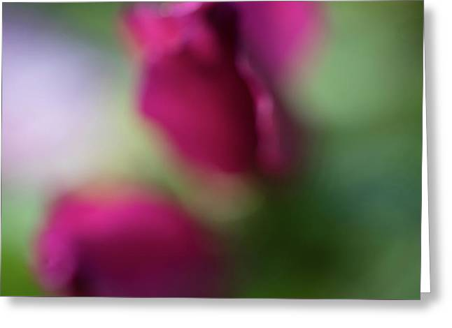 Distant Roses Greeting Card