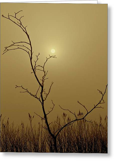 Small Trees Greeting Cards - Distant Sun Greeting Card by Odd Jeppesen