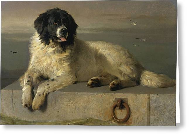 Distinguished Member Of The Humane Society Greeting Card by Edwin Landseer