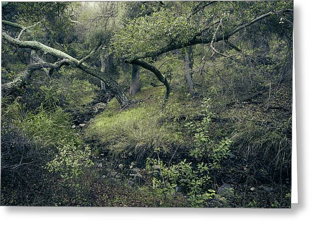 Greeting Card featuring the photograph Ditch And Oaks by Alexander Kunz