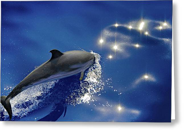 Dive Into The Blue Greeting Card