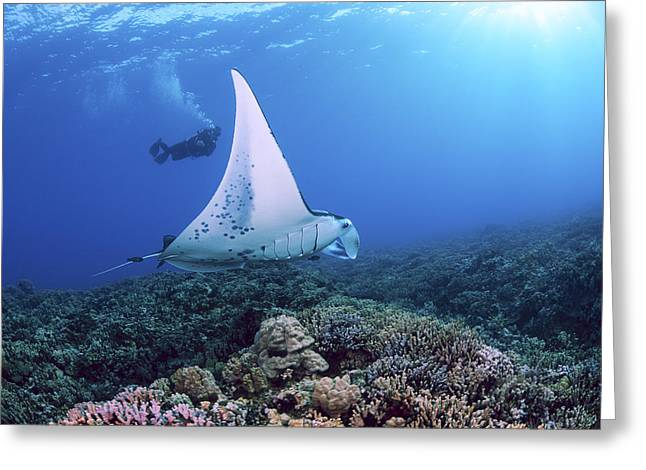 Diver And Ray Greeting Card by Dave Fleetham - Printscapes