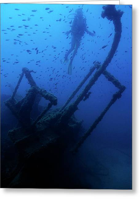 Diver Exploring The Dalton Shipwreck With A School Of Fish Swimming Greeting Card by Sami Sarkis