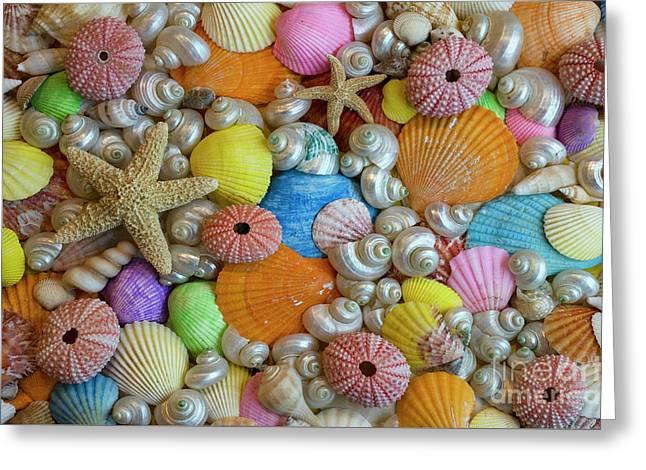 Seashells 1 Greeting Card by Bob Christopher