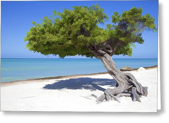 Divi Tree Of Aruba Greeting Card by David Letts