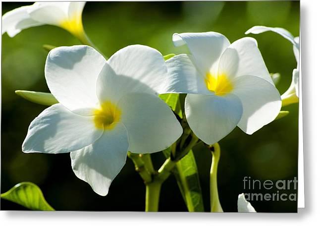Divine Blossoms Greeting Card by Deba Panee