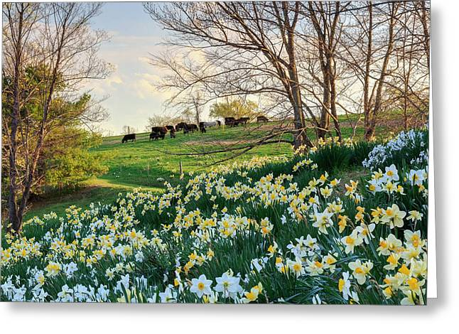 Divine Bovines Square Greeting Card by Bill Wakeley