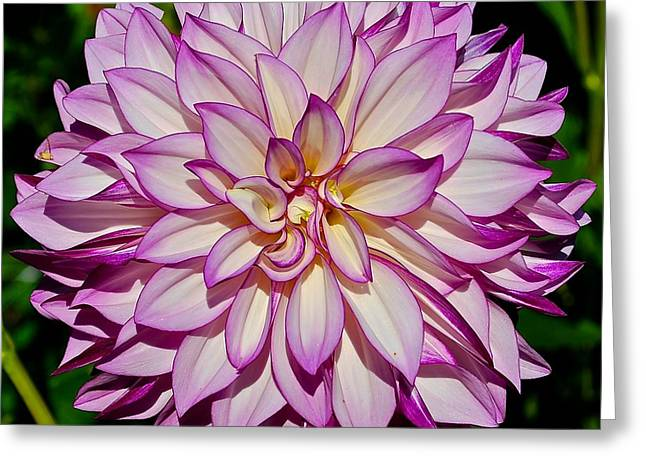 Divine Dahlia Blessings  Greeting Card