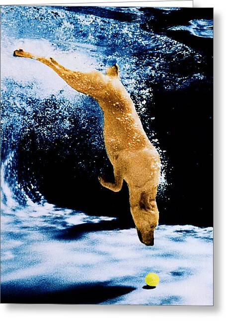Diving Dog Underwater Greeting Card