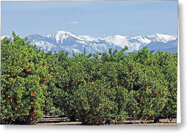 Greeting Card featuring the photograph Dm6850-e Orange Grove And The Sierra Nevada Ca by Ed Cooper Photography