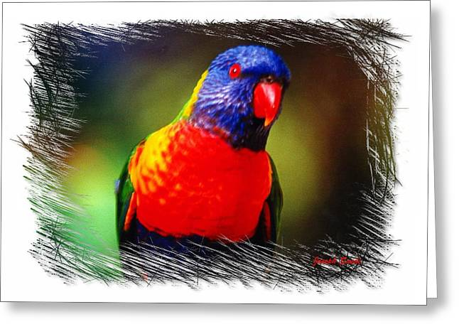 Do-00153 Colourful Lorikeet Greeting Card by Digital Oil