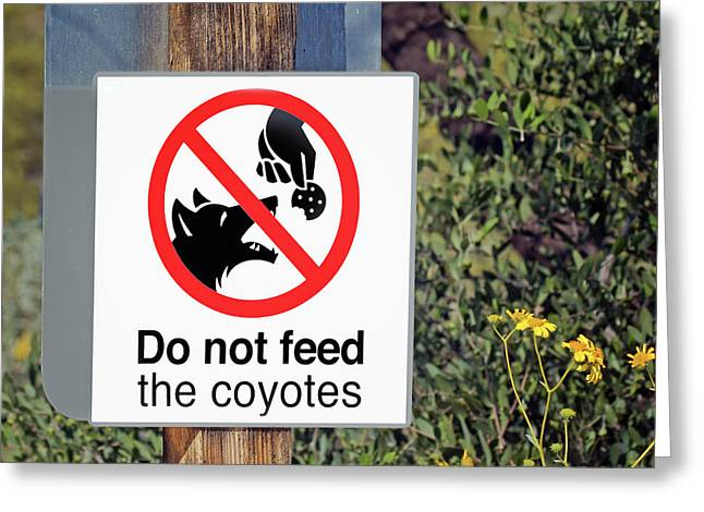 Do Not Feed - Coyotes - Sign Greeting Card by Nikolyn McDonald