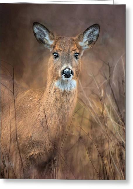 Greeting Card featuring the photograph Doe A Deer by Robin-lee Vieira