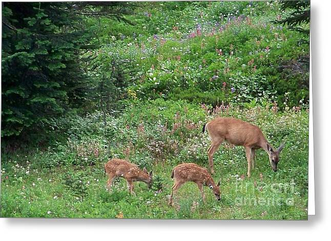 Greeting Card featuring the photograph Doe And Twin Fawns by Charles Robinson