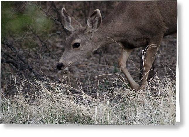 Doe Carefully Grazing In Tombstone Greeting Card by Colleen Cornelius